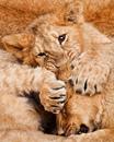 Кошки – венец творения, апогей ловкости и феерия очарования. Нет создания грациознее…
