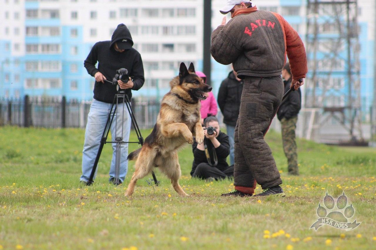 Русский ринг 24.05.14 Новосибирск ESqAhCtKW9Q