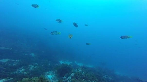 #РИА_Видеоклуб Дайвинг на острове Сан-Клементе: богатая флора и фауна Тихого океана славится во всем мире: http://ria.ru/videoclub/20160723/1472722891.html