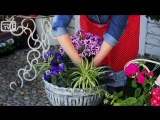 Дизайн сада своими руками 🌟 Цветочная композиция в вазоне ➡ мастер-класс hitsad