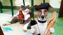 Смешные Коты и Кошки 2018 Приколы с Котами и другими Животными 2018 Приколы про Котов 89