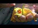 Персональный блог Светланы Кацаповой 50 вып кабачки, яблони