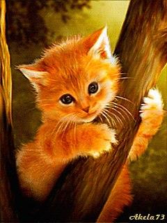Коты воители огнезвезд фото - 6