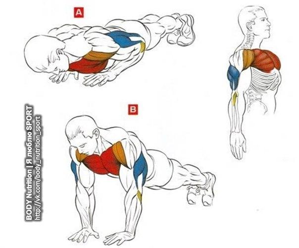 Тело человека устроено достаточно сложно, и для Как накачать мышцы одним от