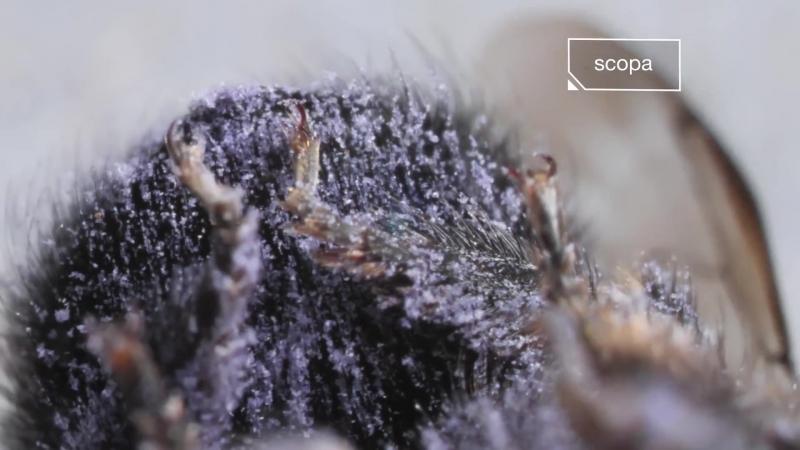 Watch This Bee Build Her Bee jeweled Nest Deep Look