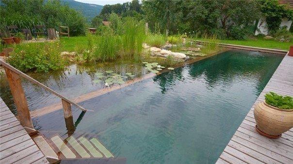 Самоочищающийся пруд. Советы по созданию: Растения для биотопного водоема.