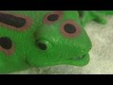 `Сьешь лягушку`, или как переделать все трудные дела - Доброе утро - Первый канал