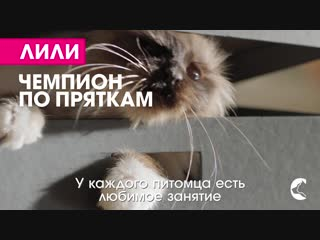RUSSIA_PERFECTFIT_TVC_OLV_20sec_2019_114_O_OK+VK