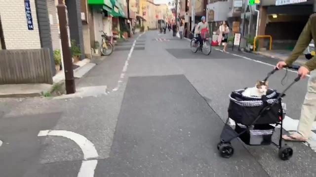 Японский котик в коляске и дед Kawaii Alina Rin in Japan coub