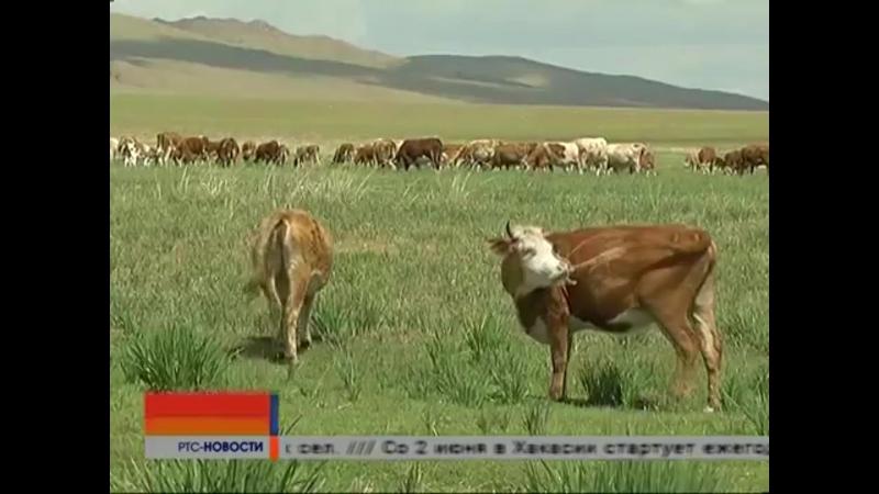 Увеличение выплат на поголовье подворного животноводства