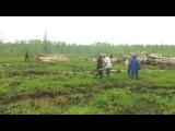 День посадки леса на Новгородчине