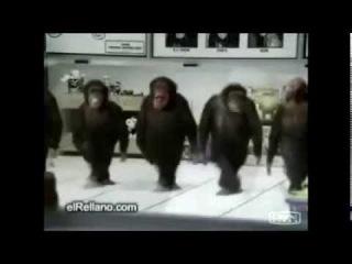 Танцы зверей. Ох уж эти животные!