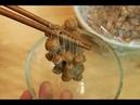 Chickpea natto Garbanzo Non Soybean Series