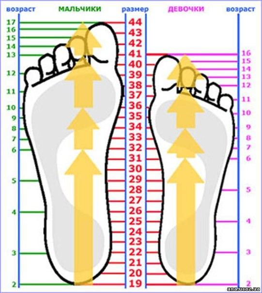 Таблица размеров стоп для детей (4 фото) - картинка