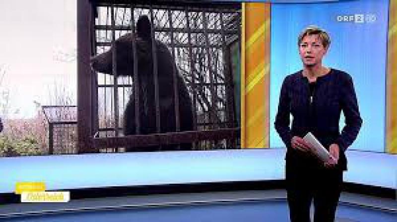 ORF австрийцы спасают медведей из украинского плена 584457_2_Rec186