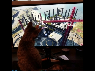 Even my cat can not wait for Black Ops 4