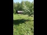 video-32f3429c3c0360438f2235c5dd8a5ee6-V.mp4