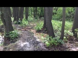 Очистка каскада прудов на реке Чернавка в г. Раменское. Верхний пруд до очистки.