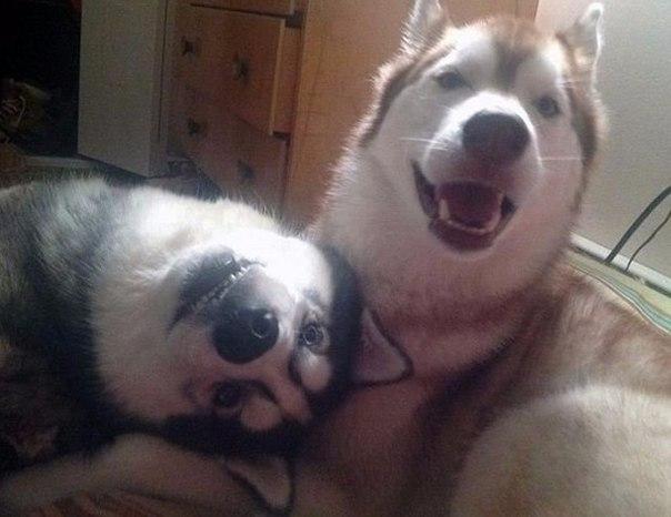 Друзья, которые растут вместе с нами: ↪ — Подруга привела своего питомца знакомиться с моей собакой. Думали, не поладят.