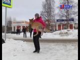 Новые правила ПДД вступили в силу. Теперь домашних животных через дорогу придется переносить на руках.( 1 апреля!!)