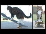 Кошка Didga из Австралии обожает кататься на скейтборде!