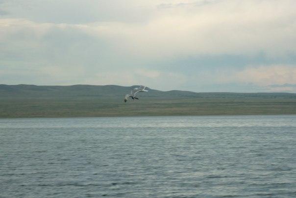 Поездка по Саянскому кольцу сначала на десяти колёсах, потом на восьми. Часть вторая, от Кызыла до Ак-Довурака, потом до Красноярска.