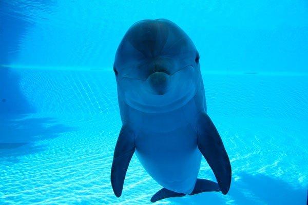 Знакомство тигренка и дельфина