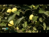 Монастырские сады Валаама. RTG HD, 2014