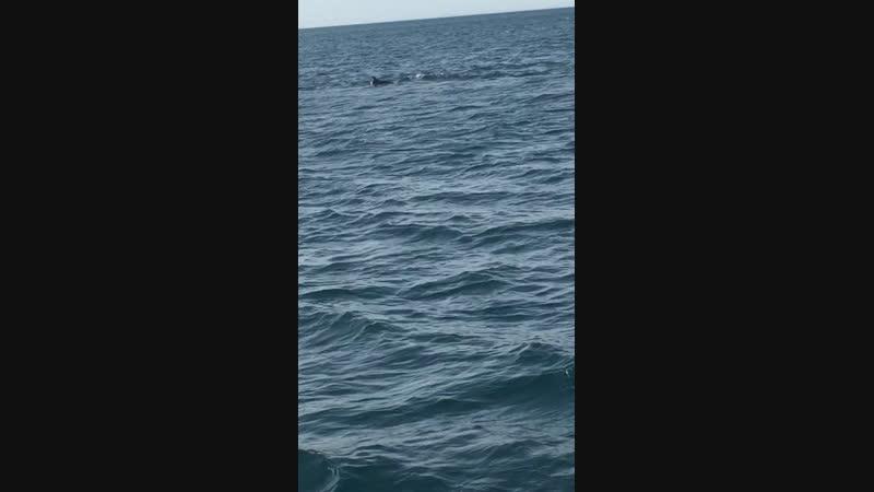 Дельфины целый день гонялись