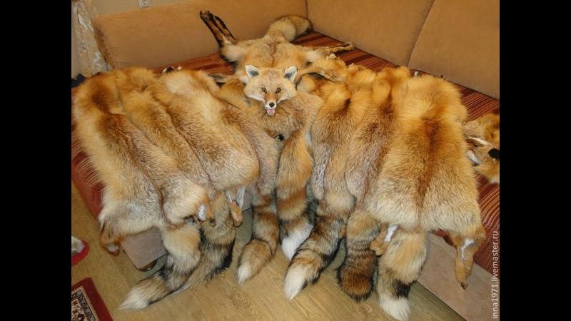 Выделка меха лисы в домашних условиях мой опыт