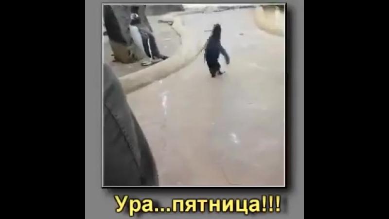 Пятница! Пингвин