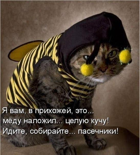https://pp.userapi.com/c620828/v620828877/12268/LhUAYDpct5I.jpg