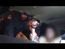Пьяная автомобилистка разгромила машину полиции