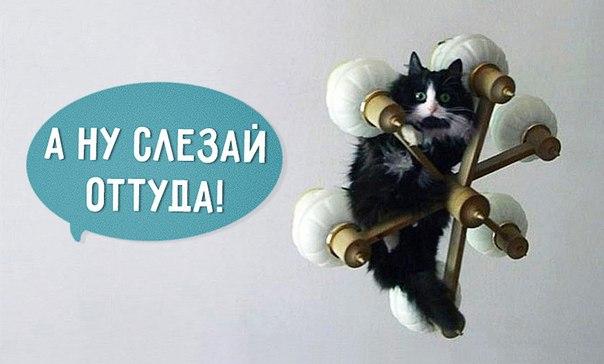 16 фраз, которые мы постоянно говорим своему коту: ↪ ДА-ДА-ДА!