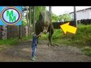 Парк ДИНОЗАВРОВ! Веселое видео для детей Мульти Мишка
