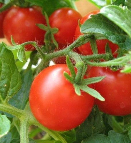Овощи, которые стоит посадить рядом друг с другом на даче