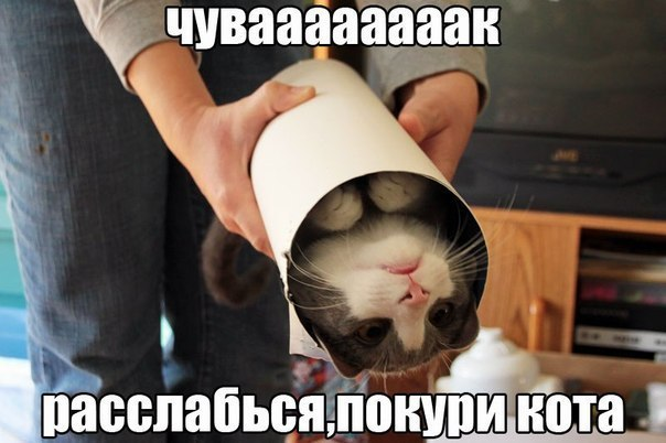 http://cs416321.vk.me/v416321793/2b96/P2qhvLd1YY8.jpg