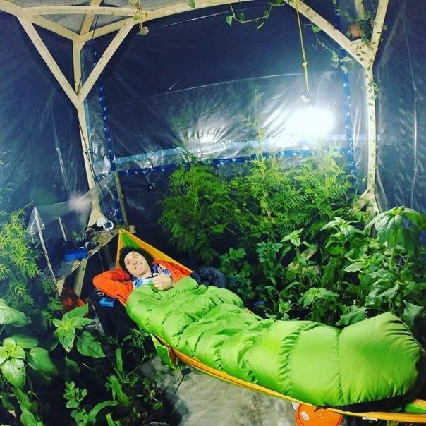 Канадский блогер Куртис Бауте построил воздухонепроницаемый парник с сотнями растений (тыквой, подсолнухом, картофелем и кукурузой) и заперся в нем, чтобы доказать, что он сможет прожить в