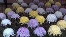 Япония Выставка хризантем в Ботаническом саду Дзиндаи Chrysanthemum exhibition Chofu Jindai Garden