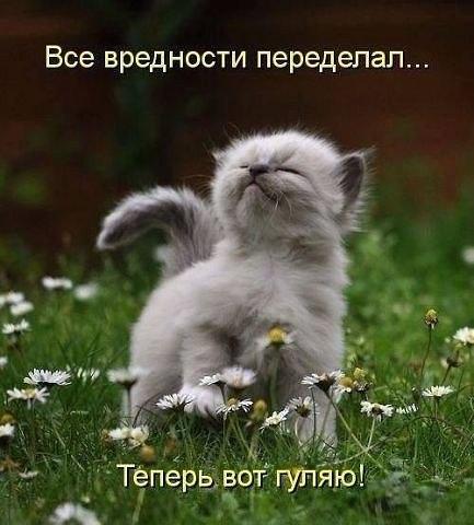 http://cs405530.vk.me/v405530848/8891/tj0sr4l7qbU.jpg
