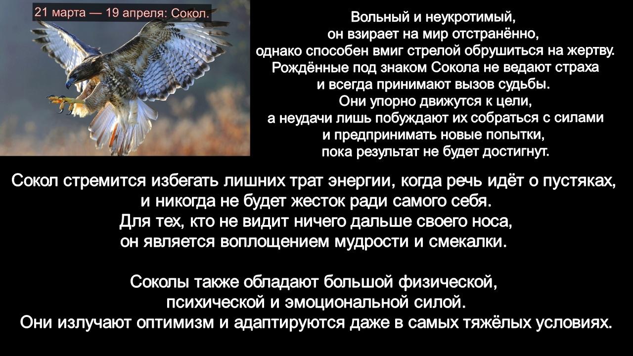зодиак - Гороскоп американских индейцев. Тотемные животные по Знаку Зодиака. Астрология. ETbkkmByKHs