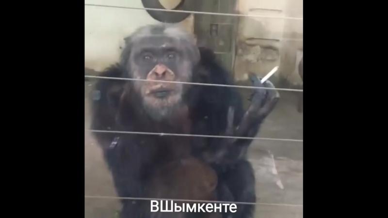 В зоопарке Прикол с обезьяной mp4