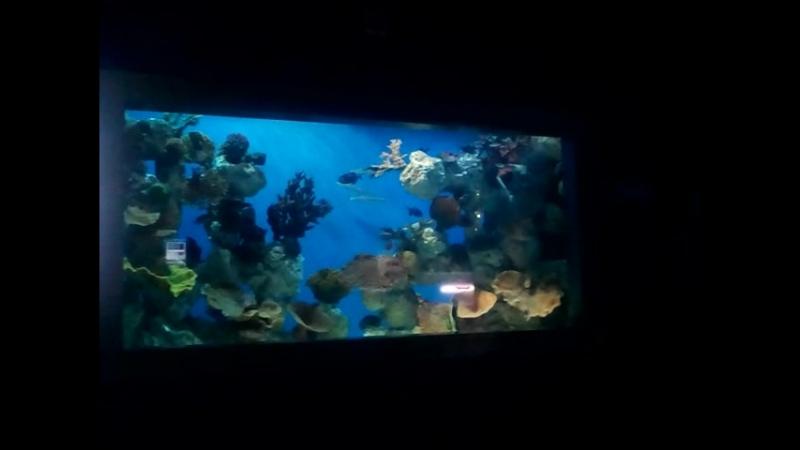 Кораллы в океанариуме СПб