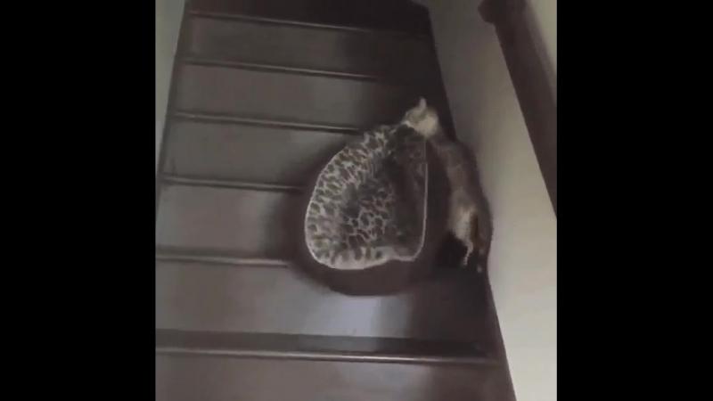 Кошка обиделась, и поэтому решила съехать от меня со своей лежанкой. На второй этаж.
