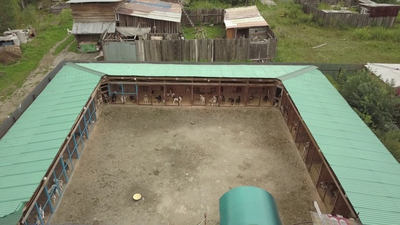 Приют бездомных собак г.Снежинск
