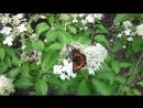 Стая бабочек в Музеоне