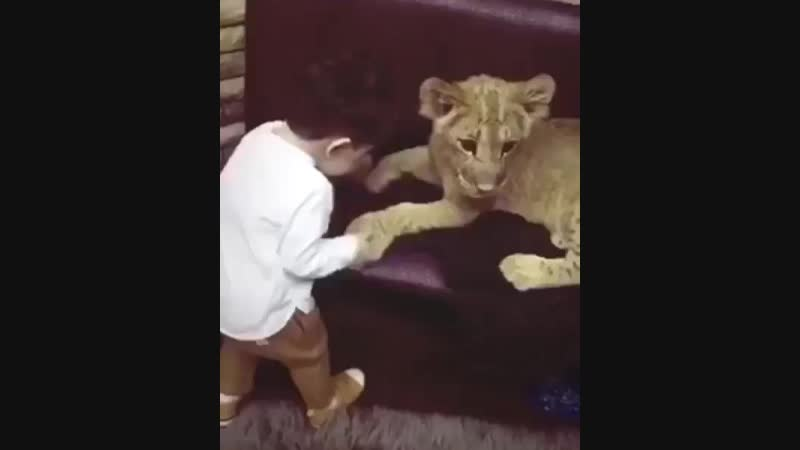 я тоже хочу такого льве 🌚😻