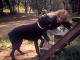 «Воспитание жестокости у женщин и собак» (1992) - драма, реж. Инесса Селезнёва