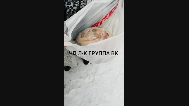 Детский сад Ленинск кузнецкий