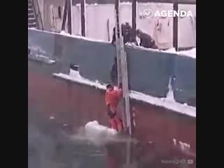 Небезразличные люди помогли животным, оказавшимся в трудной ситуации